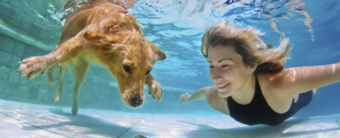 Swimming pool safety for pets